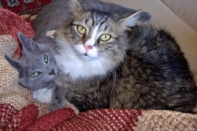 Smokey and Bandit - Adopted August 8, 2008